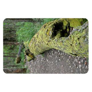 Path beside mossy log rectangular magnet