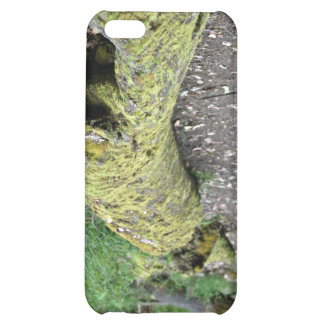 Path beside mossy log iPhone 5C cover