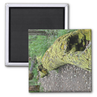 Path beside mossy log square magnet