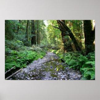 """Path of Ferns"", Muir Woods Poster"