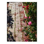 Path of Roses Postcard