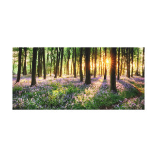 Path through bluebell woods canvas print