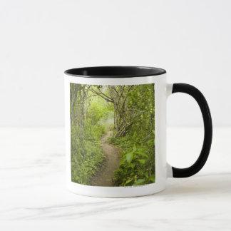 Path through the forest mug