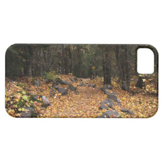 Path Through the Forest; No Text iPhone 5 Cases