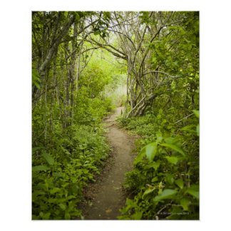Path through the forest poster