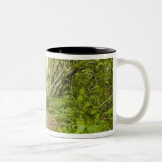 Path through the forest Two-Tone coffee mug