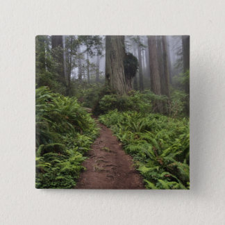 Path through the giant redwood trees shrouded 2 15 cm square badge