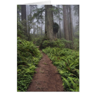 Path through the giant redwood trees shrouded 2 card