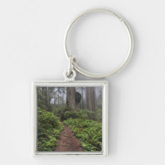 Path through the giant redwood trees shrouded 2 key ring