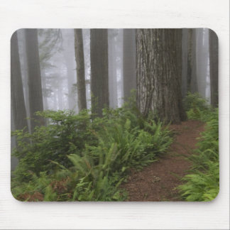 Path through the giant redwood trees shrouded mouse mat