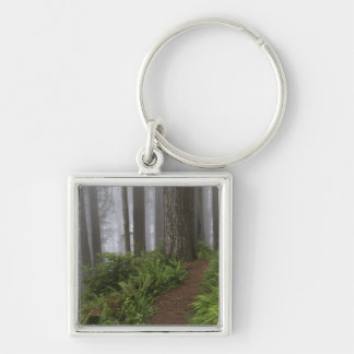 Path through the giant redwood trees shrouded Silver-Colored square key ring