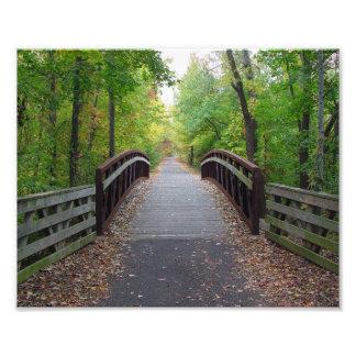 Path through the Woods Print Photo Print