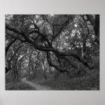 Path thru oak tree grove in Andrew Molera State Posters