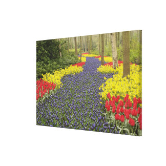 Pathway of Grape Hyacinth, daffodils, and Canvas Print