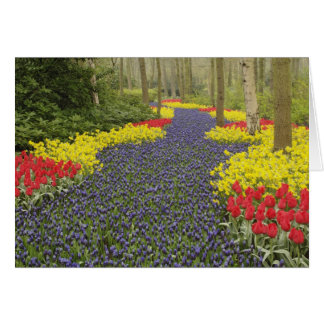 Pathway of Grape Hyacinth, daffodils, and Card