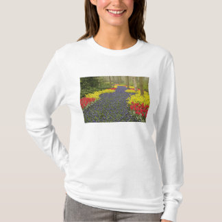 Pathway of Grape Hyacinth, daffodils, and T-Shirt