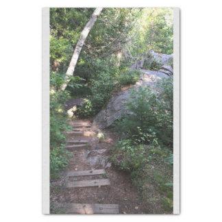 Pathway Through Trees Tissue Paper