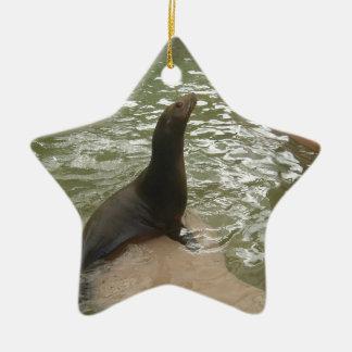Patient Seal Ceramic Star Decoration