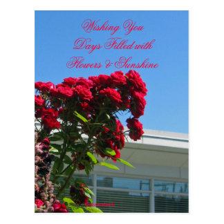 Patio Roses Postcard