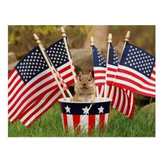 Patriotic Chipmunk Postcard