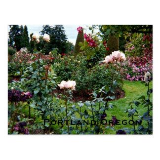 Patriotic Colors Rose Garden Postcard