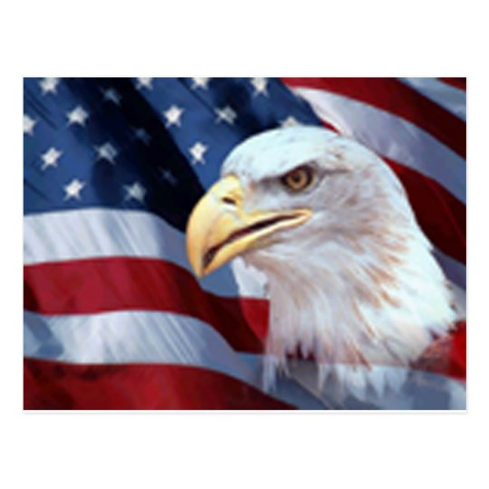 Patriotic Eagle Postcard