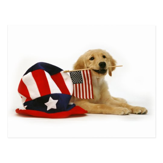 Patriotic Golden Puppy Postcard