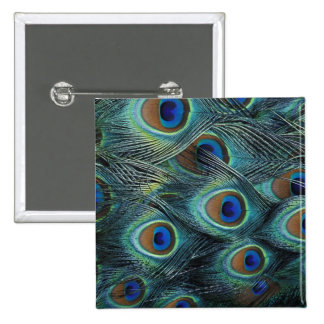 Pattern in male peacock feathers 15 cm square badge