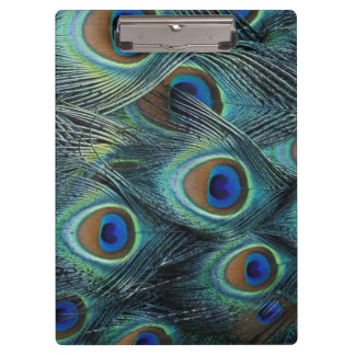 Pattern in male peacock feathers clipboard