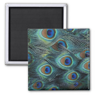 Pattern in male peacock feathers square magnet