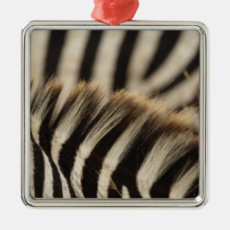 Pattern of Burchell's Zebra stripes, Equus Christmas Ornament