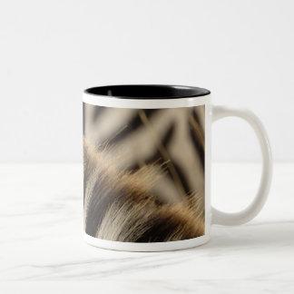 Pattern of Burchell's Zebra stripes, Equus Coffee Mug
