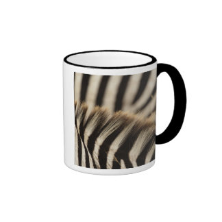 Pattern of Burchell's Zebra stripes, Equus Mugs