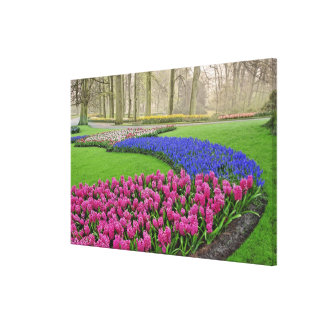Pattern of Grape Hyacinth, tulips, and 2 Canvas Print