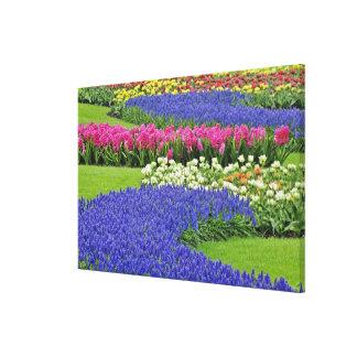 Pattern of Hyacinth and Tulip flowers in Keukenhof Canvas Print