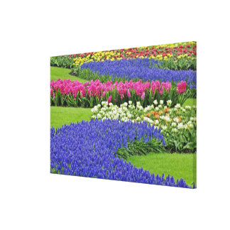 Pattern of Hyacinth and Tulip flowers in Keukenhof Stretched Canvas Prints