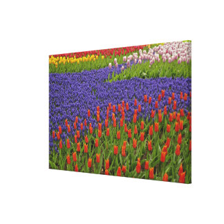 Pattern of tulips and grape hyacinth flowers, 2 stretched canvas prints