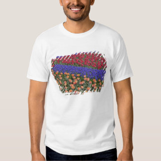 Pattern of tulips and Grape Hyacinth flowers, 3 Shirts