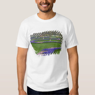 Pattern of tulips and Grape Hyacinth flowers, 4 Shirt