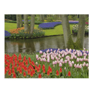 Pattern of tulips and grape hyacinth flowers, postcard