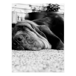 Patti Bloodhound Postcard