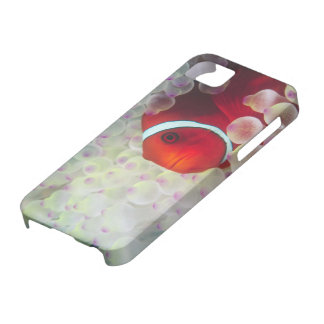 Paupau New Guinea, Great Barrier Reef, Barely There iPhone 5 Case