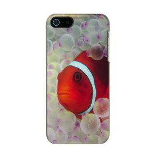 Paupau New Guinea, Great Barrier Reef, Incipio Feather® Shine iPhone 5 Case