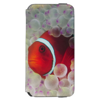 Paupau New Guinea, Great Barrier Reef, Incipio Watson™ iPhone 6 Wallet Case