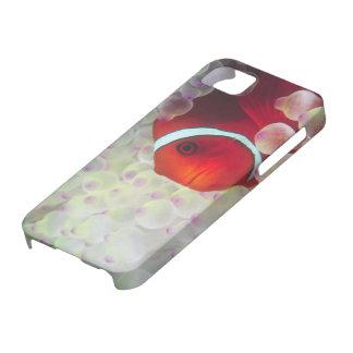 Paupau New Guinea, Great Barrier Reef, iPhone 5 Case