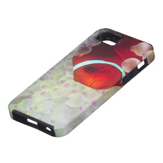 Paupau New Guinea, Great Barrier Reef, iPhone 5 Cover