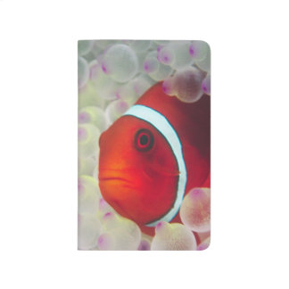 Paupau New Guinea, Great Barrier Reef, Journal