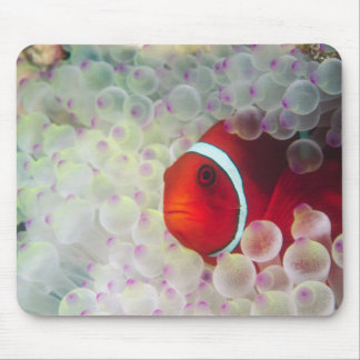 Paupau New Guinea, Great Barrier Reef, Mouse Mat