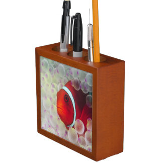 Paupau New Guinea, Great Barrier Reef, Pencil Holder