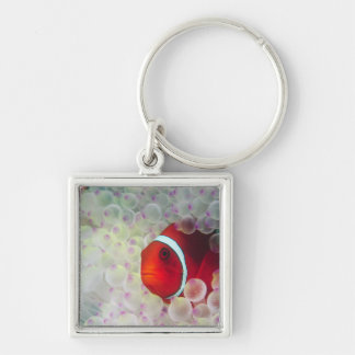 Paupau New Guinea, Great Barrier Reef, Silver-Colored Square Key Ring